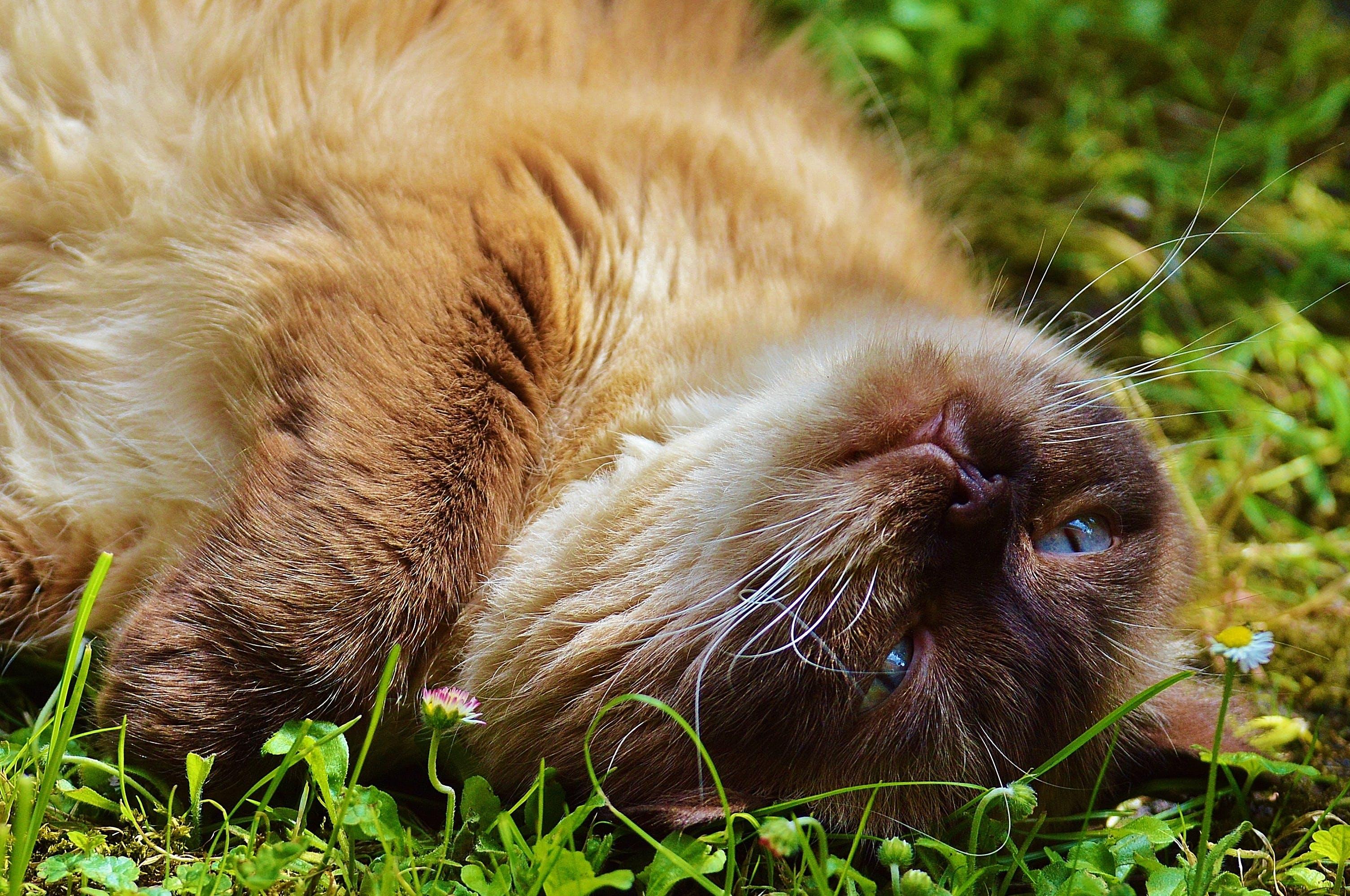 Brown Cat on Green Grass