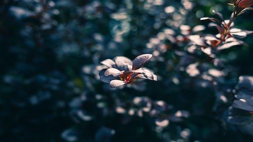 アウトドア, バックグラウンド, ボケ, 紫の無料の写真素材