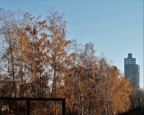 Foto d'estoc gratuïta de vista de la ciutat
