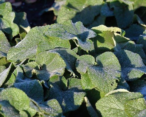Foto d'estoc gratuïta de una capa de gel a les plantes