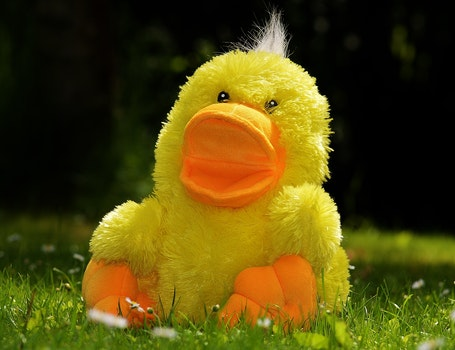 Yellow Plush Duck Toy