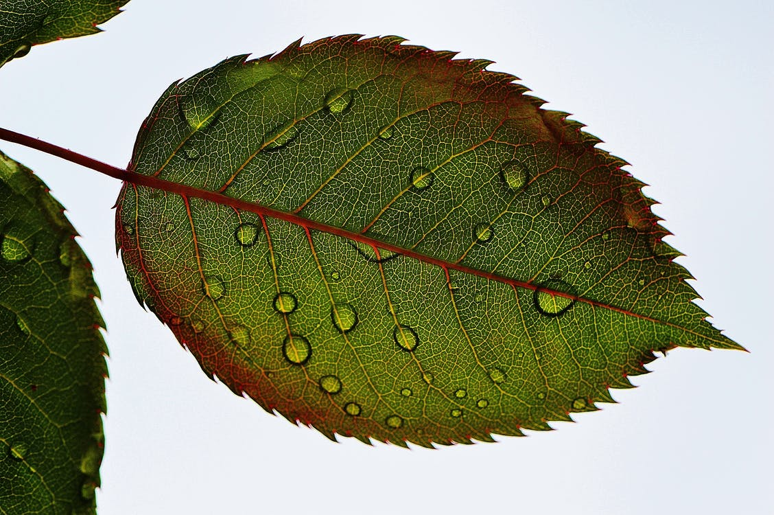 Green Leaf Close-up Photography