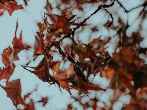 Close Up Photography of Red Leaves