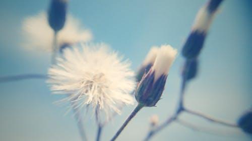 Gratis stockfoto met blauwe lucht, Bos bloemen, bureaublad achtergrond, gratis achtergrond