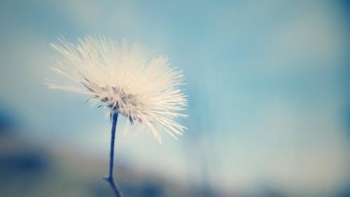 Gratis stockfoto met bloemen achtergrond, bureaublad achtergrond, gratis achtergrond, macro