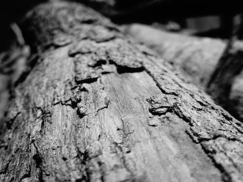 Kostnadsfri bild av bark, ekbark, makro, makrofoto