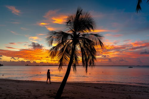 Palm Tree On The Beach During Sunset