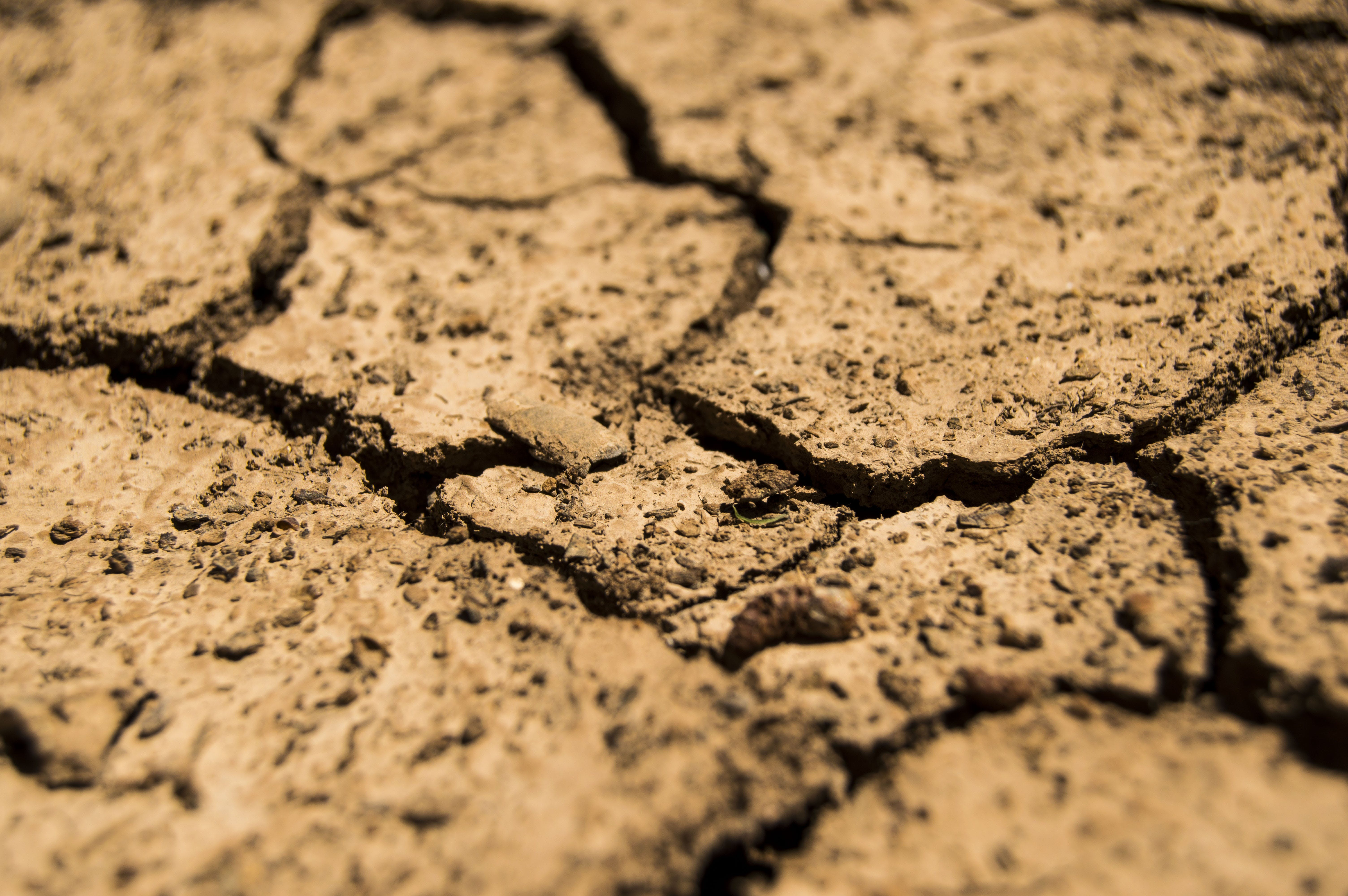 Shallow Focus Photography of Dried Soil