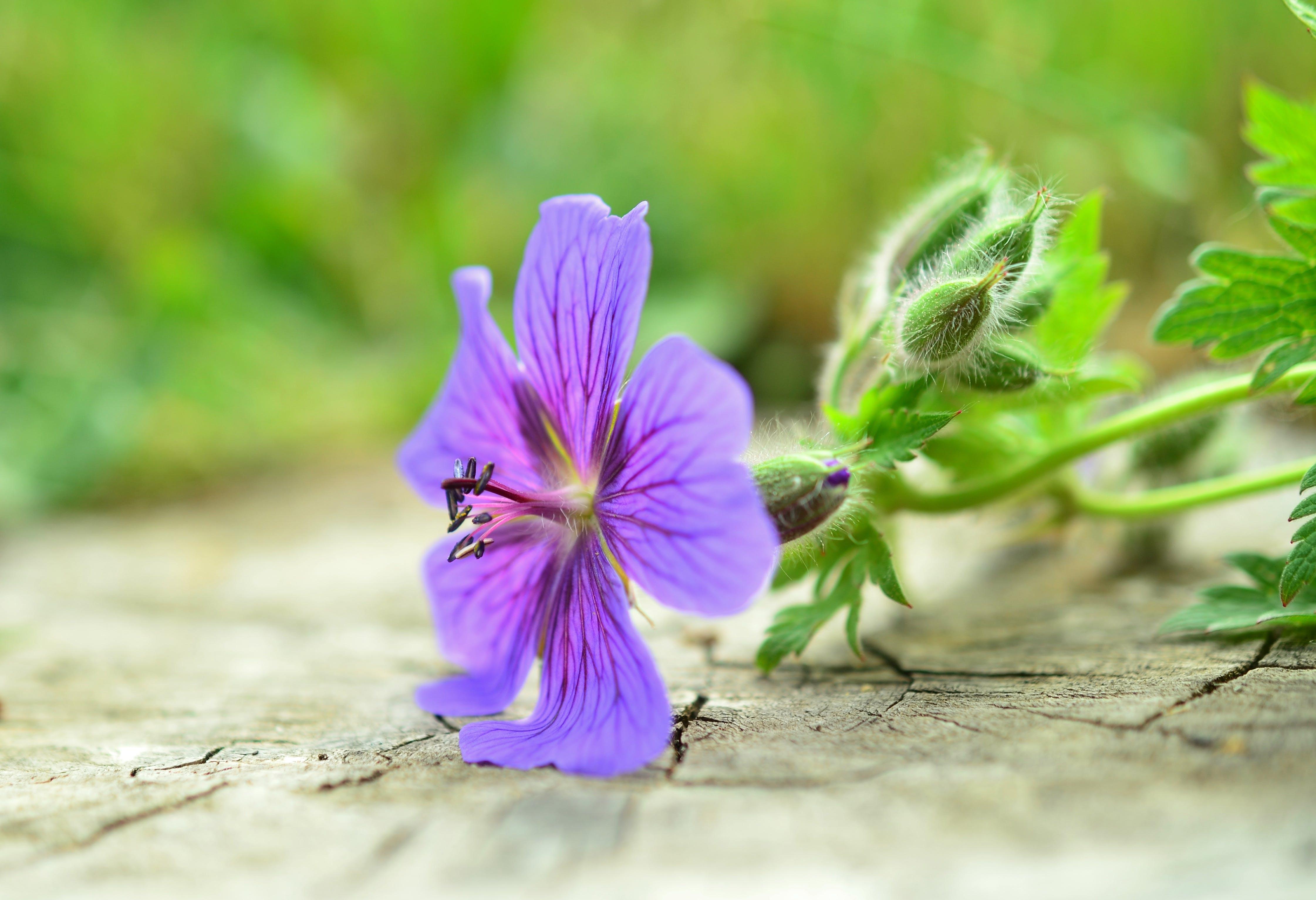Purple Petal Flower Plant in Macro Photo
