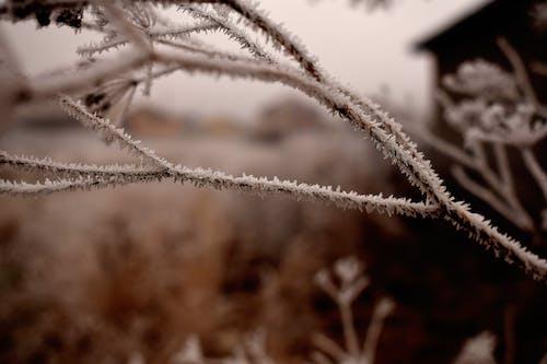 Photos gratuites de concentrer, froid, hiver, neige