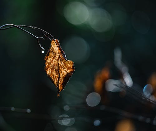 Delicate tree branch with wilted leaf and raindrops