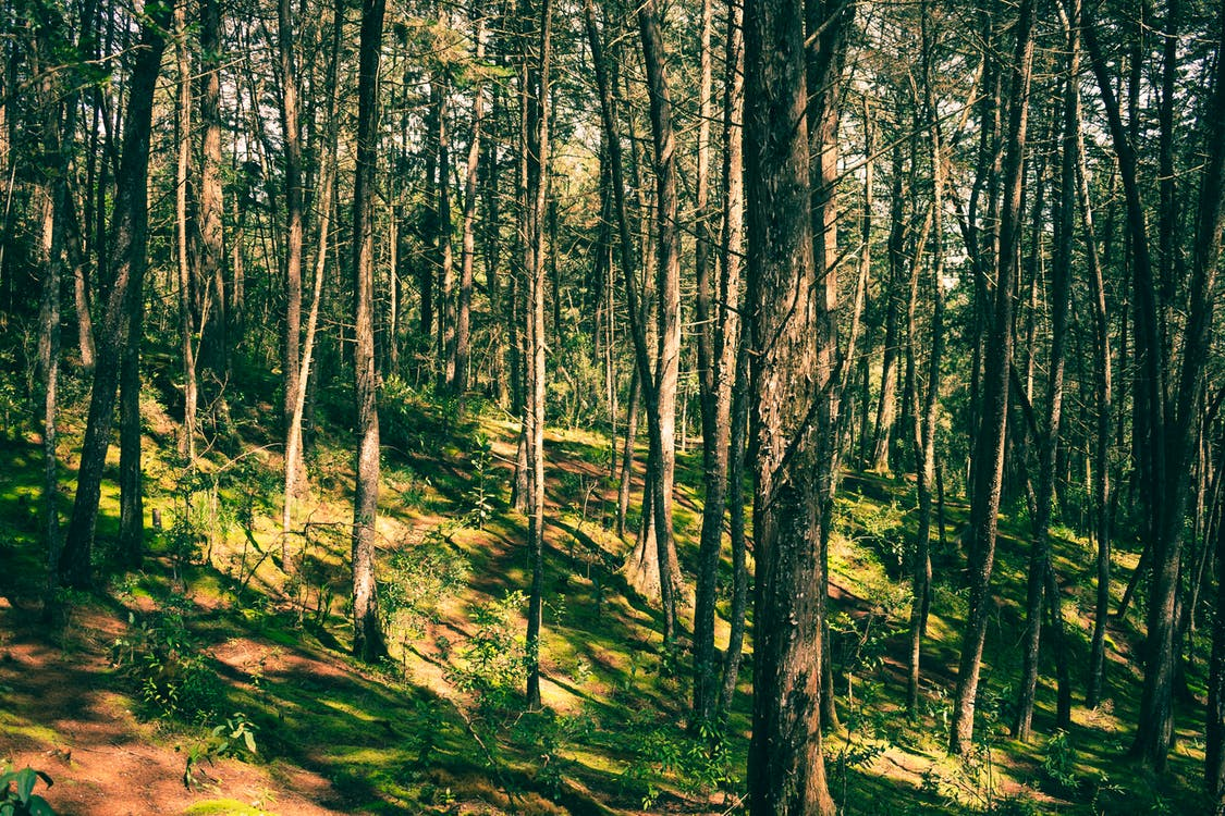 Free stock photo of forest, nature, sunbeam