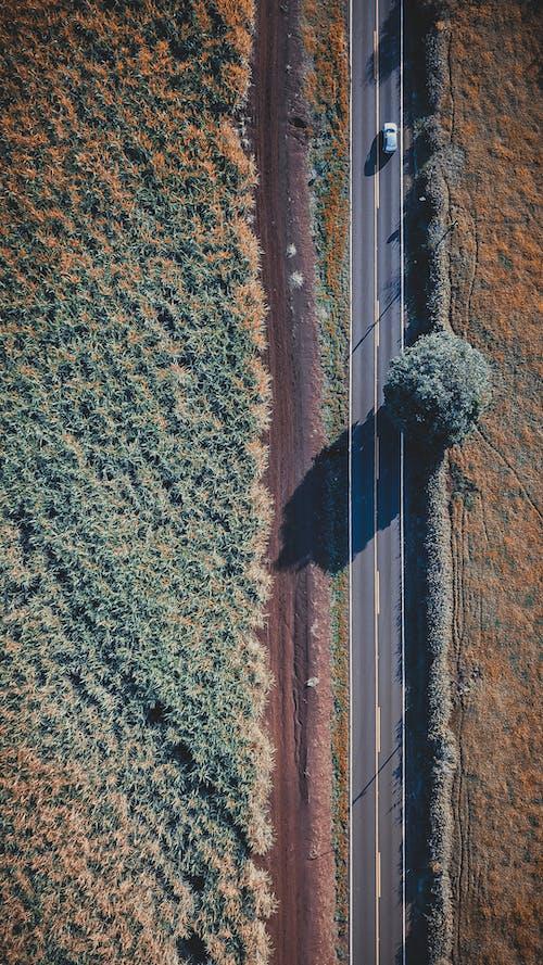 Воздушный выстрел из сельскохозяйственных угодий