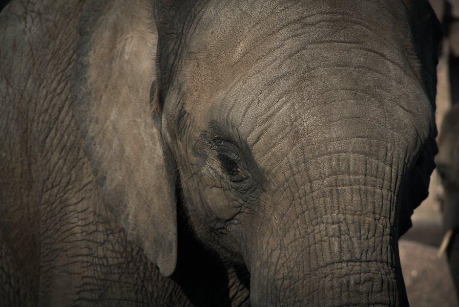 Animal wildlife close up elephant