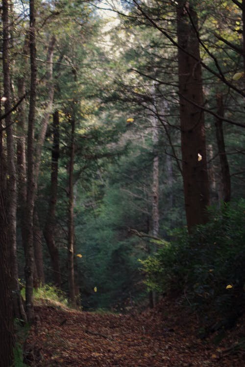 Free stock photo of forest, trees, woods