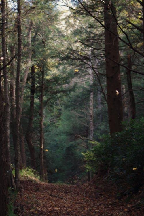 Immagine gratuita di alberi, boschi, foresta