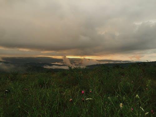 Immagine gratuita di campo, nebbia