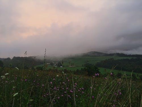 Immagine gratuita di nebbia