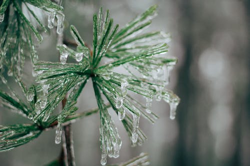 Free stock photo of forest, ice