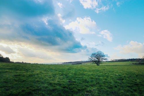 Ingyenes stockfotó csupasz fa, felhők, füves terület, legelő témában