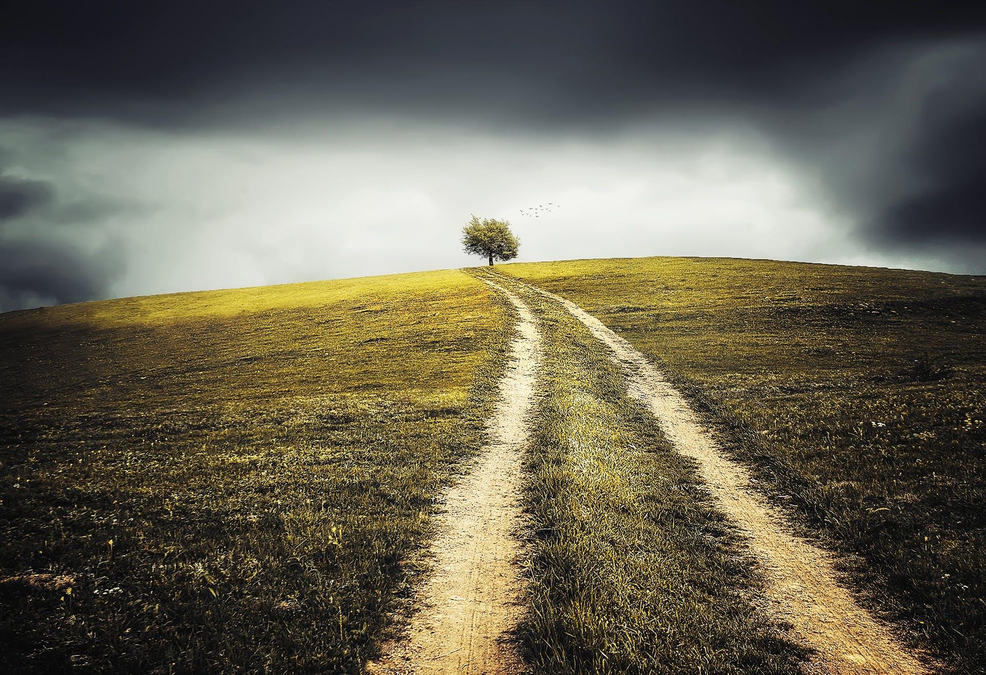 フィールド, 土地, 小径, 草の無料の写真素材