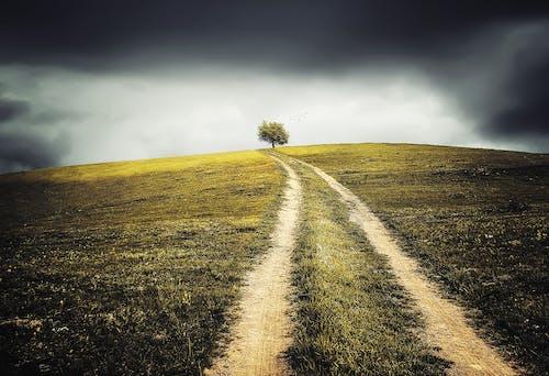 Gratis stockfoto met boom, gebied, gras, landschap