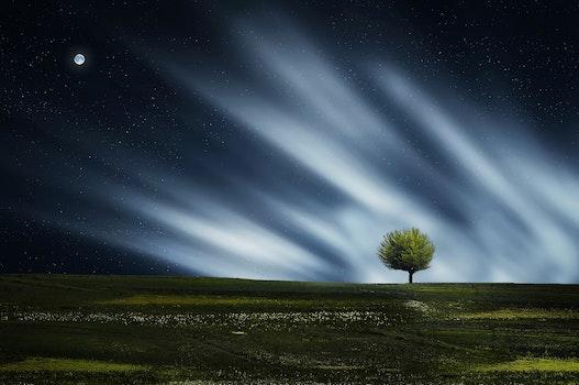 Free stock photo of landscape, nature, night, plant