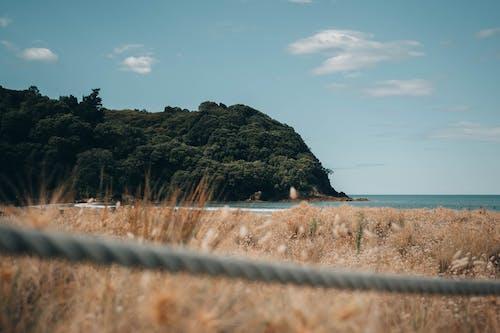 Immagine gratuita di avventura, mare, nuova zelanda