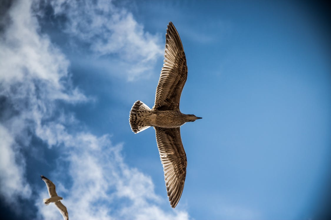 Low Angle Photography of Brown Birds Under Blue and White Sky