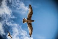flug, himmel, vogel
