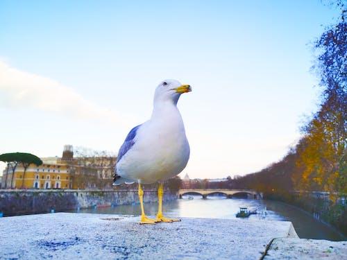 kuş içeren Ücretsiz stok fotoğraf