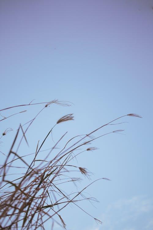 คลังภาพถ่ายฟรี ของ กลางวัน, การถ่ายภาพธรรมชาติ, การเจริญเติบโต, ข้างนอก