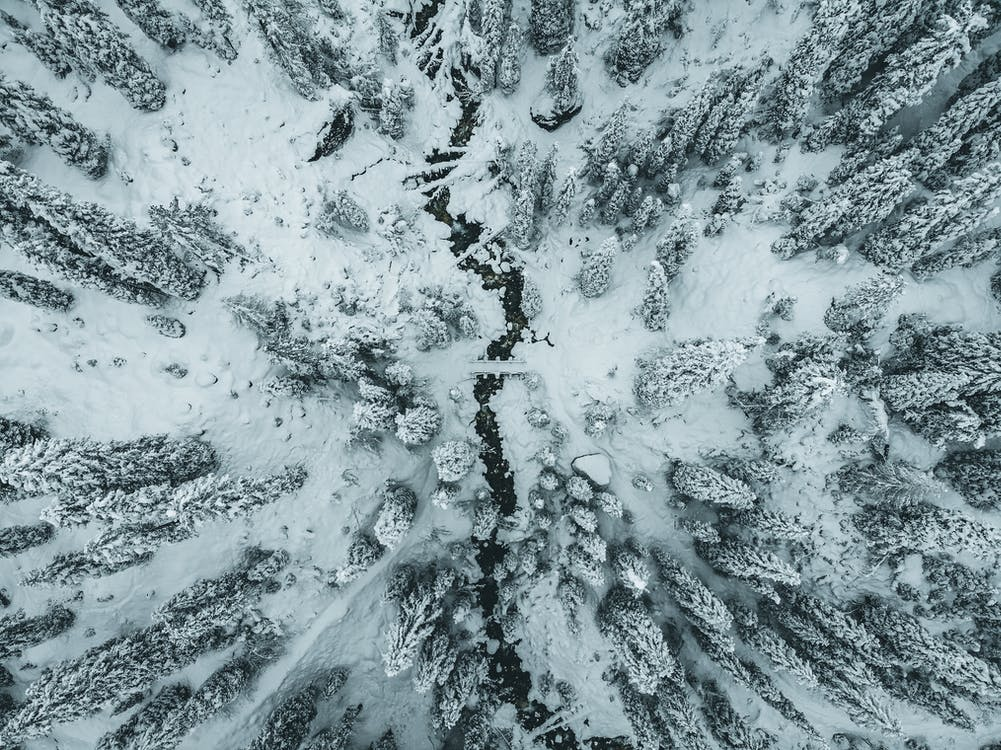 Aerial Shot Of Forest
