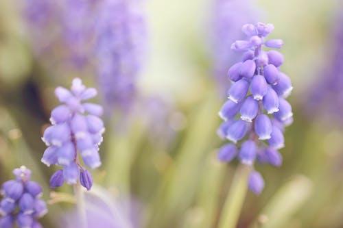 Ảnh lưu trữ miễn phí về hoa, lớn lên, màu tím, vườn