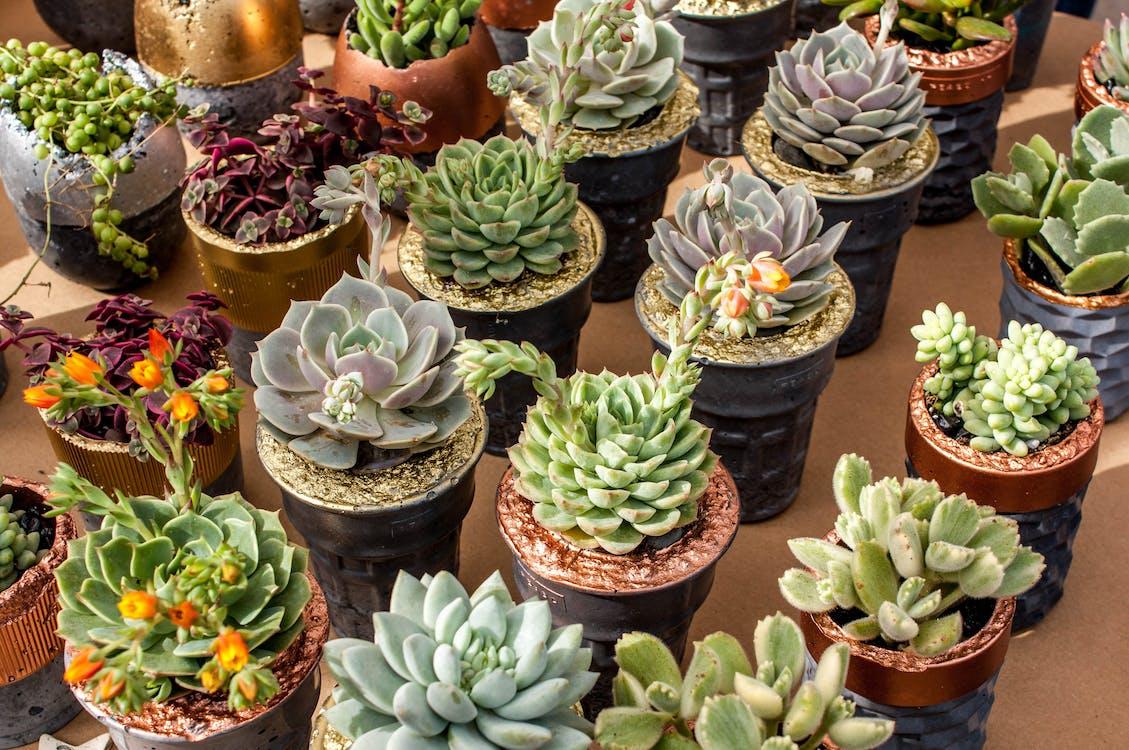 collection, succulent, succulent plants