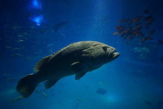 Free stock photo of blue, fish, aquarium, blue water