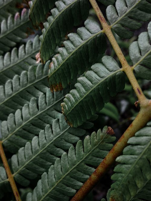 Free stock photo of abstract, abstract photo, branches, dark green plants