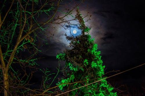 Free stock photo of #midnight, #moonlight, #night