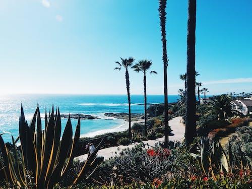 Ilmainen kuvapankkikuva tunnisteilla agaave, hiekkaranta, kaktus, kasvit