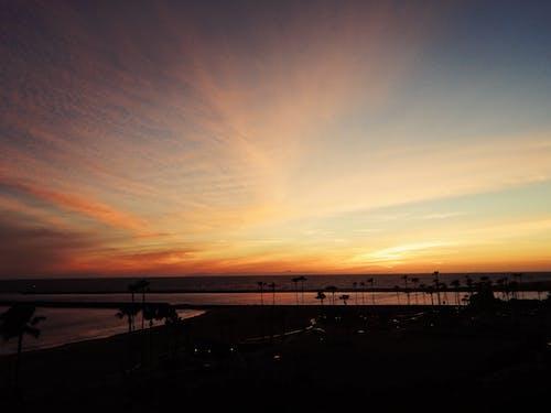 Základová fotografie zdarma na téma los angeles, moře, obloha, palmy