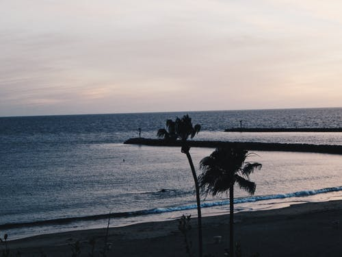 Gratis arkivbilde med los angeles, palmer, sjø, strand