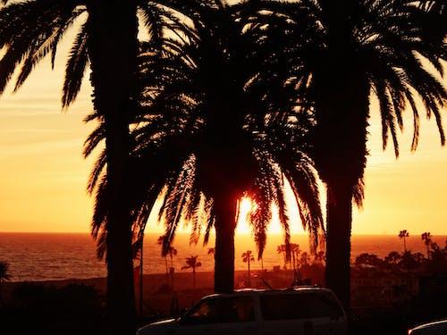 Základová fotografie zdarma na téma los angeles, moře, palmy, slunce