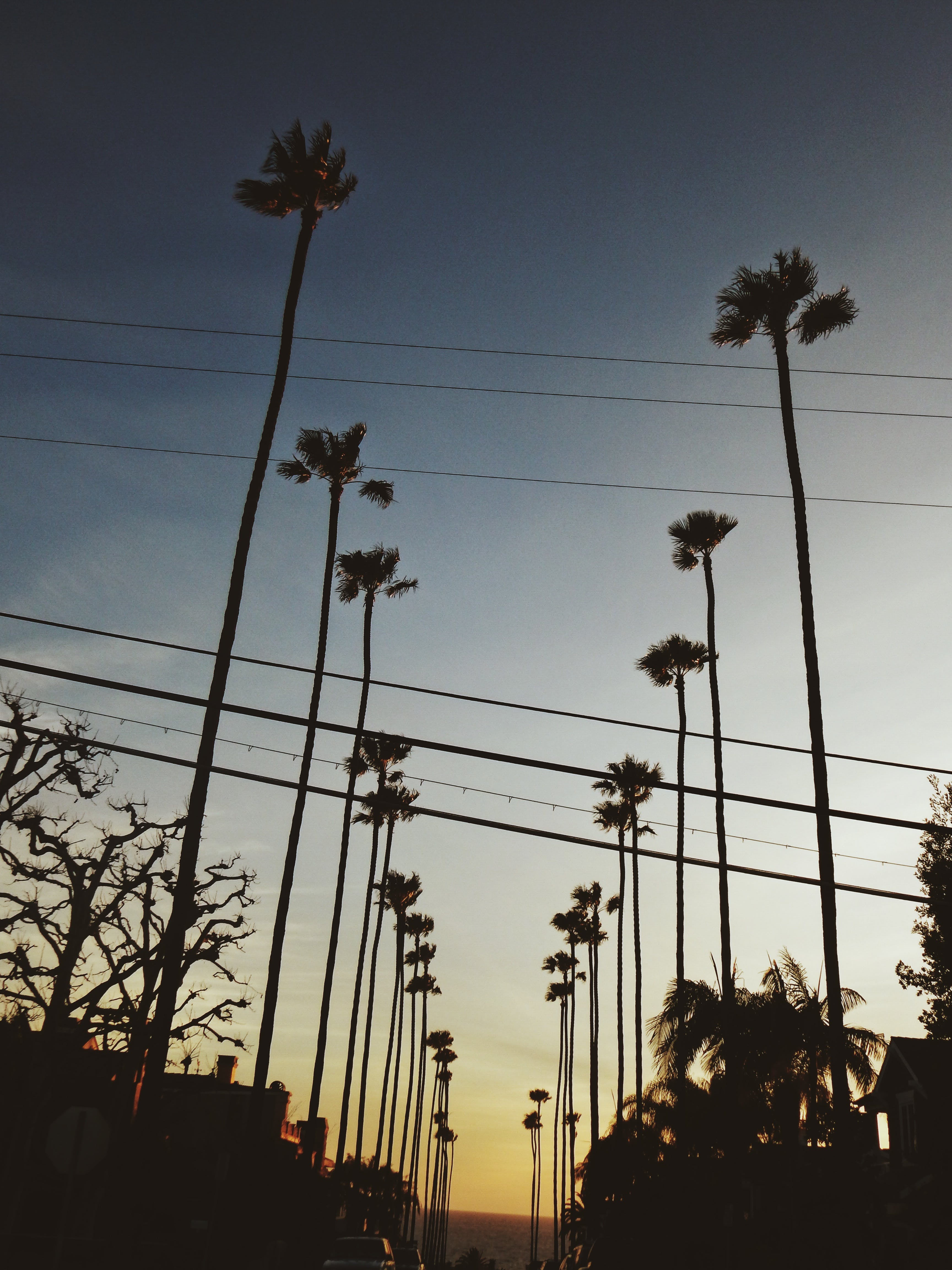 Free stock photo of california, los angeles, palms