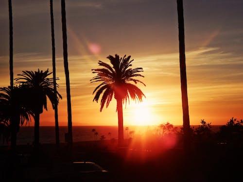 Základová fotografie zdarma na téma los angeles, palmy, slunce, západ slunce