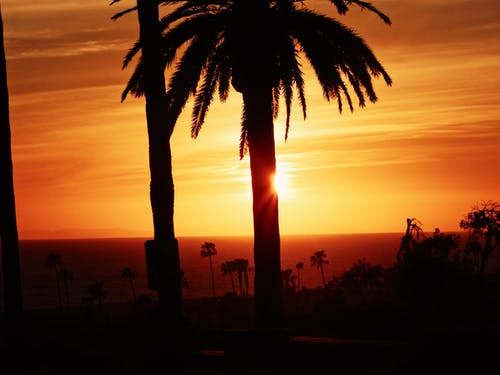 Free stock photo of los angeles, palms, sunset