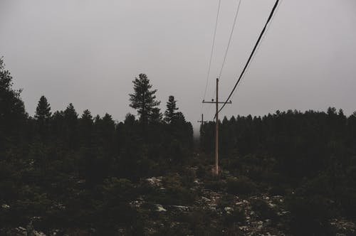 Kostenloses Stock Foto zu stromleitung, wald