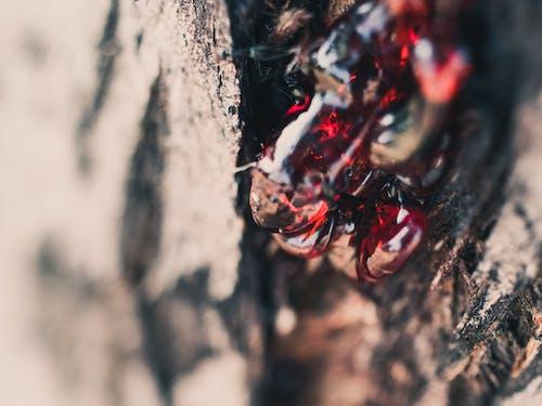 マクロ, 木, 樹液, 赤の無料の写真素材