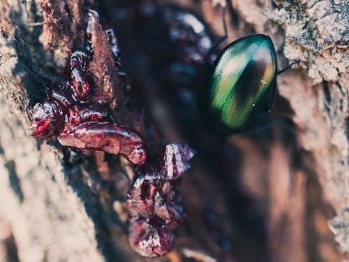 マクロ, 昆虫, 木, 緑の無料の写真素材