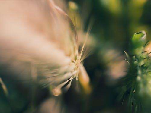 バックグラウンド, 抽象, 緑, 自然の無料の写真素材
