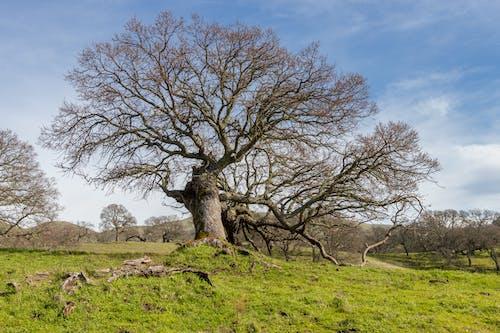 Immagine gratuita di albero, cielo, erba, nuvole